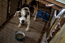 In Anapa opened a temporary detention center for stray dogs