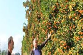 Where are citrus fruits brought to Anapa?