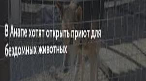 A shelter for homeless animals is being built near Anapa